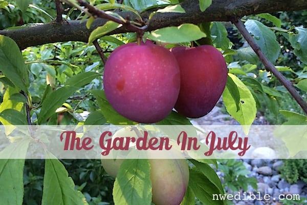 July Garden Photo Tour