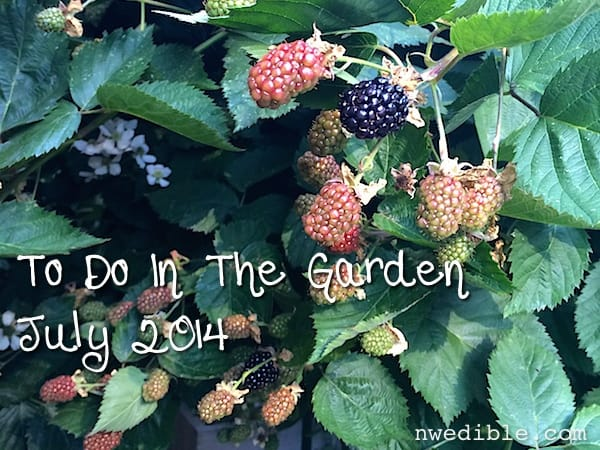 July Gardening Chores For The Pacific Northwest