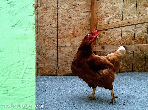 Chicken_On_Sand