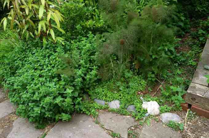 Plant herbs everywhere. This is the side of a path that's overgrown with oregano and strawberry and mint and I love it!