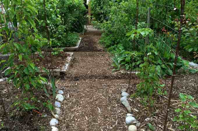 The path through the Backyard Orchard