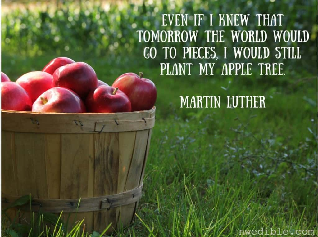 Even if I knew that tomorrow the world would go to pieces, I would still plant my apple tree.Martin Luther