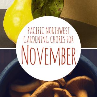 11 November Garden Chores