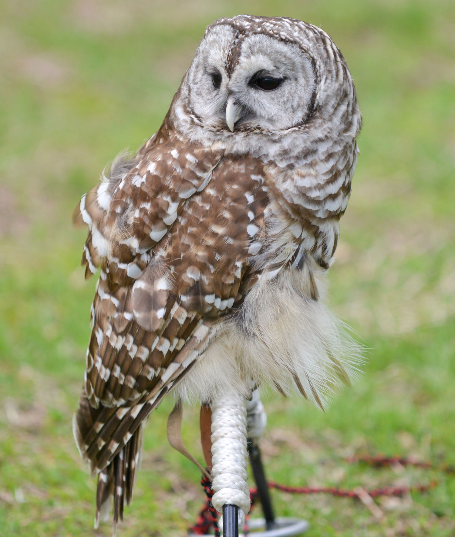 Places To Go Birding Owls Nyc Parks Auto Electrical Wiring Diagram 2001 Jetta 2 0avh Engine