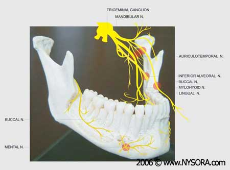 Oral and Maxillofacial Regional Anesthesia - NYSORA The New York