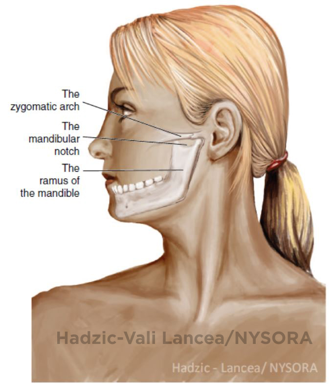Nerve Blocks of the Face - NYSORA The New York School of Regional