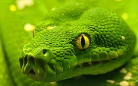 Is Snake Venom the New Botox?