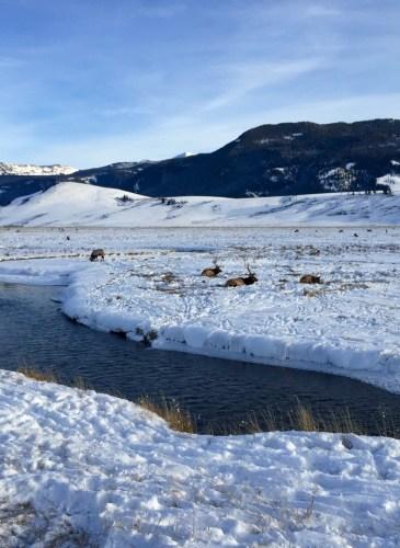 Moran - Wyoming, December 31, 2015 - 16 of 30