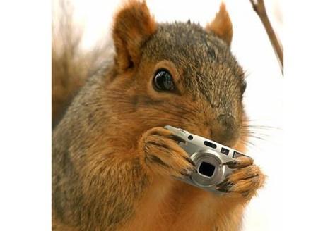 Gossip Squirrel: Q & A with NYU's rumor insider