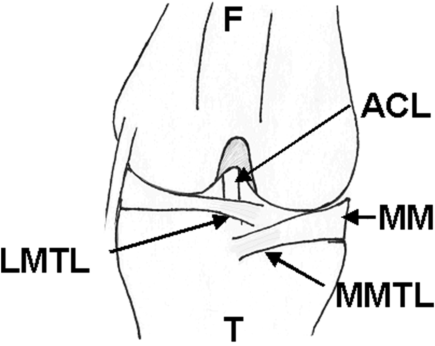 cranial cruciate ligament diagram