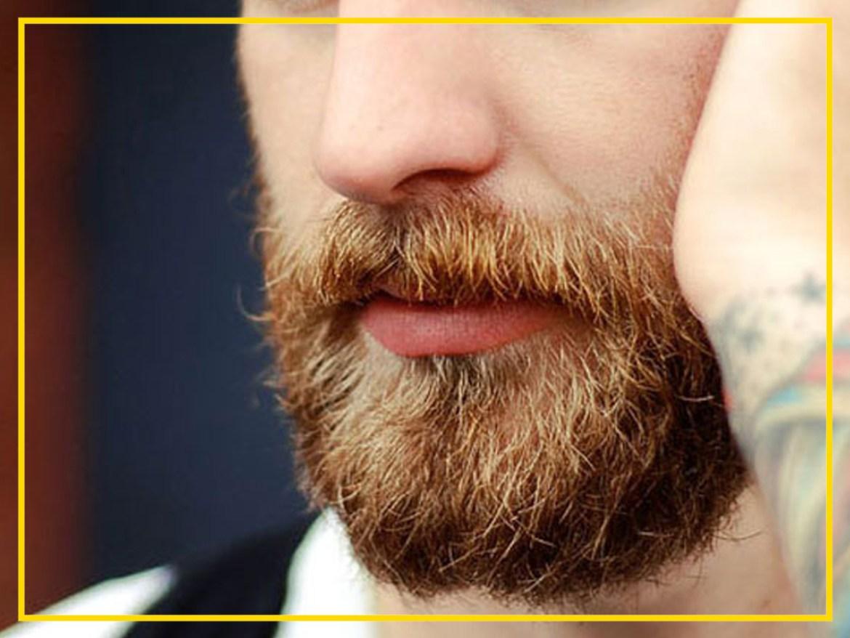 barba 2