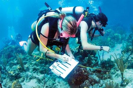 Marine biologist facts - marine biologist job description