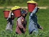 illegalimmigrantsworkin
