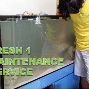 Oceansing Maintenance Fresh 1