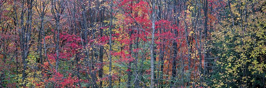 Mixed woodland in autumn - Copyright Mark Gormel 900x300