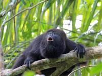 Amazon Rainforest Canopy Animals & The Amazon Rainforest ...