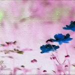 Ölmalerei Online