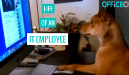 Life Of An IT Employee