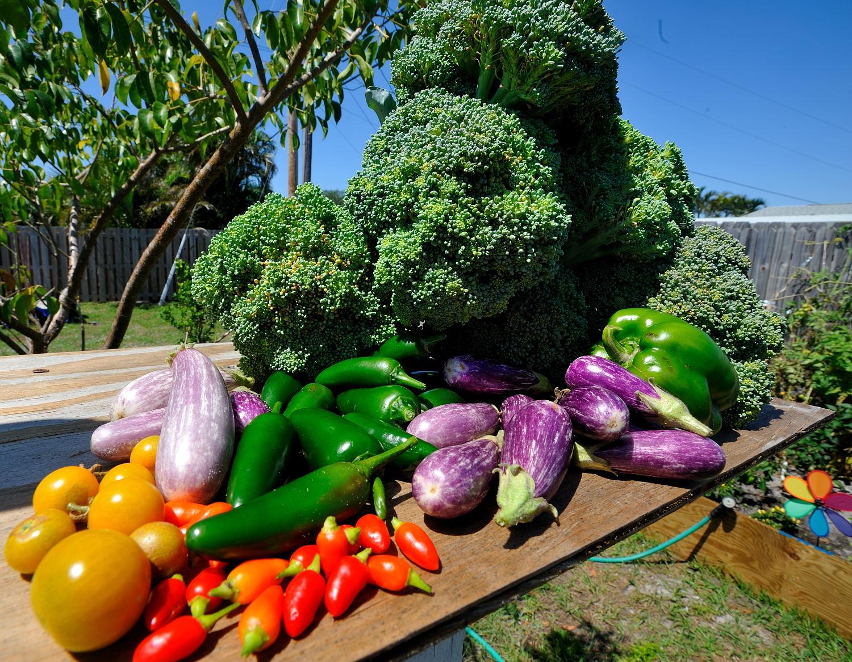 Food garden pictures - Download