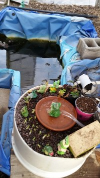 How To Build A Small-Scale, Backyard Aquaponics System For ...