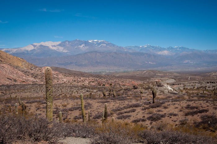 Los Cardones National Park