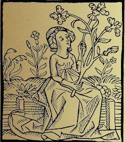 Wise Women of plants