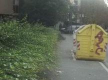 A Tortona l'edera rigogliosa invade il marciapiede, quando verrà tagliata?