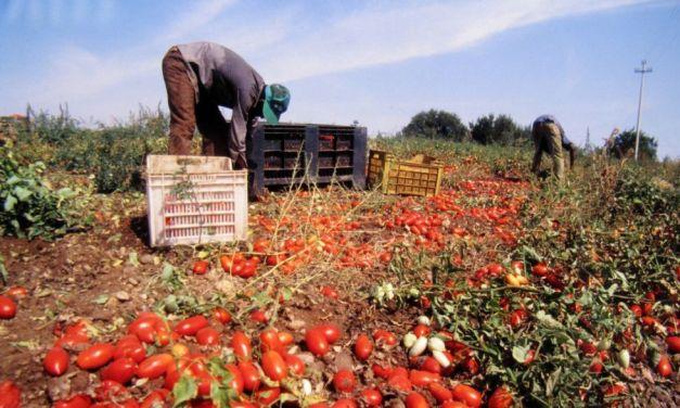 Caso braccianti di Castelnuovo Scrivia: gli agricoltori nascondono la testa per non vedere?