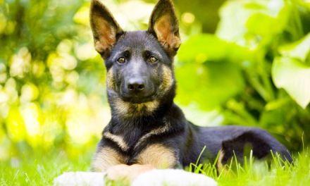 Tortonesi, adottate i cani, paga il Comune