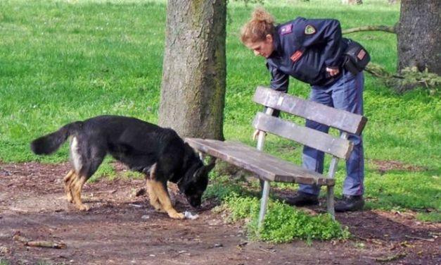 I carabinieri di Alessandria controllano i giardini della stazione con i cani antidroga, due nei guai