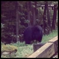 Gatlinburg, Day 3: BEAR!