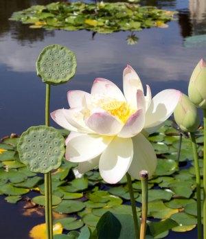 0913-brooklyn-botanical-garden-7