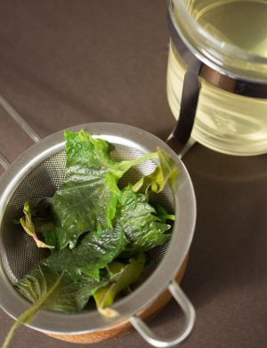 0214-tisane-tea-shiso-lemon-basil