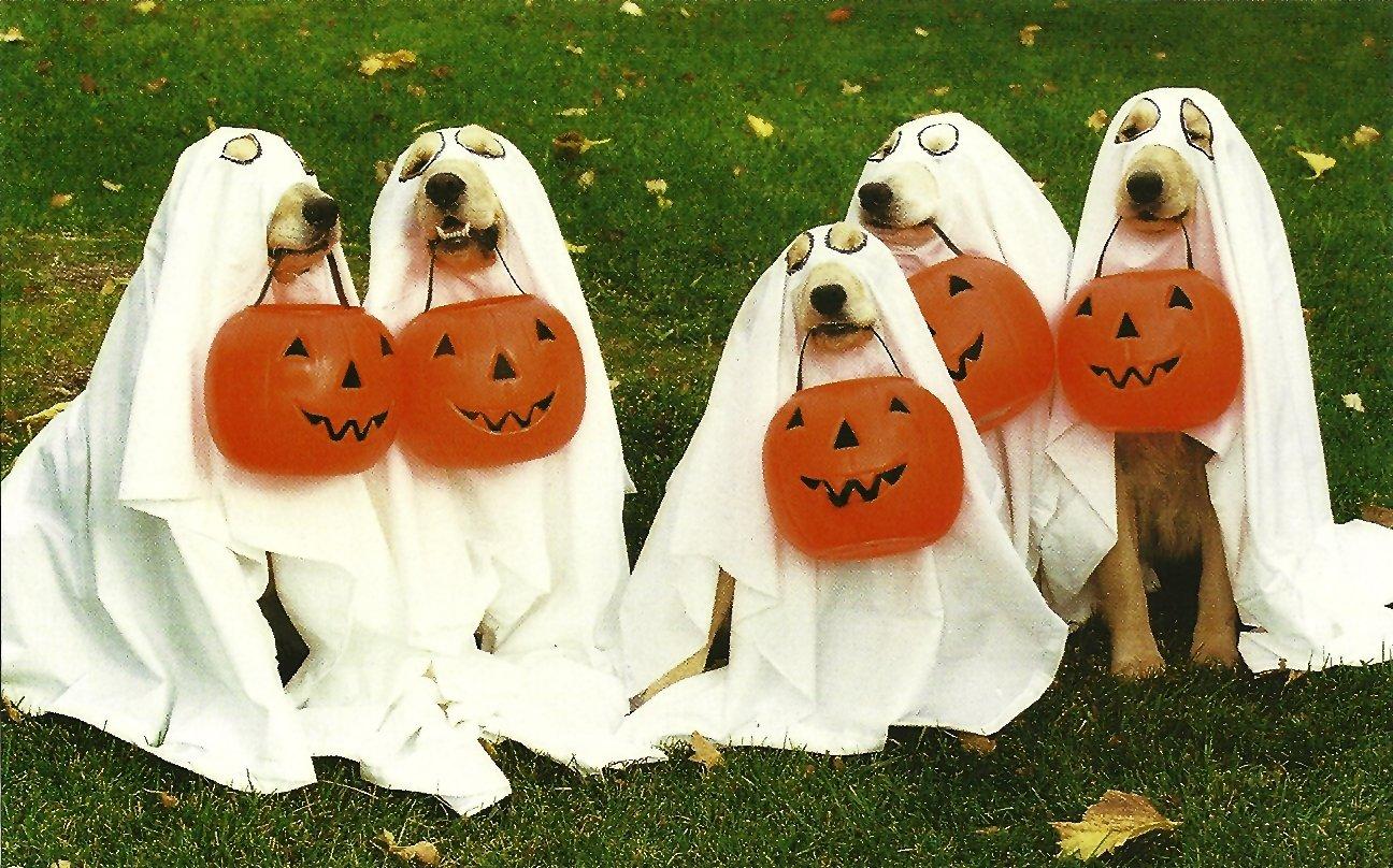 Fall Pug Wallpaper 30 Lindos Perritos Que Saben Muy Bien Como Lucir Un Disfraz