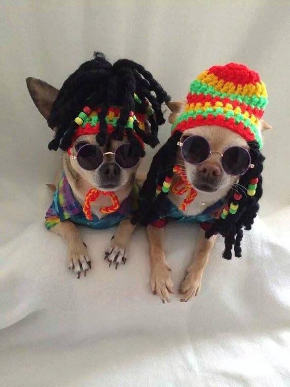 Animals In Suits Wallpaper 15 Razones Que Demuestran La Gran Actitud De Los Chihuahuas