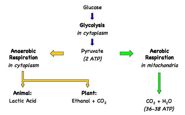fuel cells diagram standard fuel cell diagram