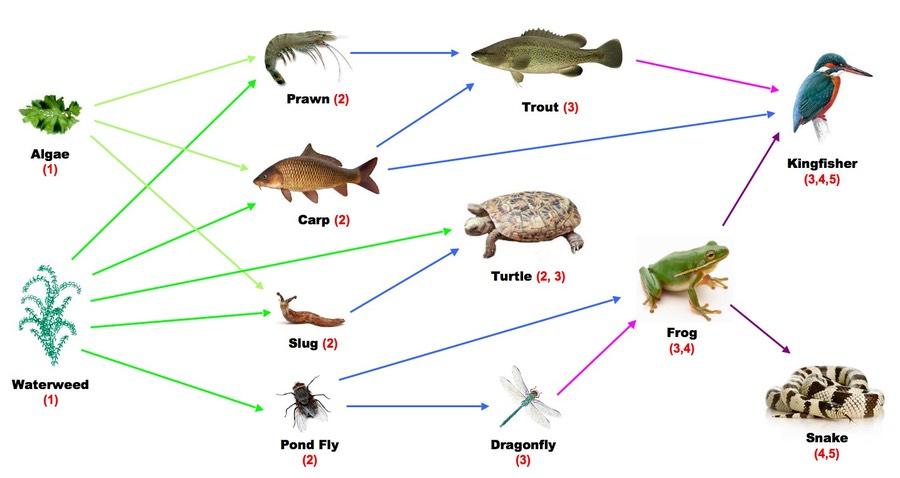 51 Communities and Ecosystems BioNinja