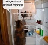gato, ratos