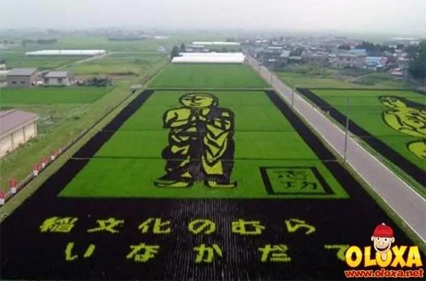 arte em plantação de arroz (23)