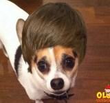 cão de uma cantora