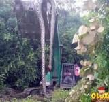 huge-snake-