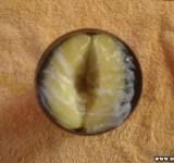 Como-fazer-uma-vagina-caseira-e-se-masturbar-mais-gostoso-1