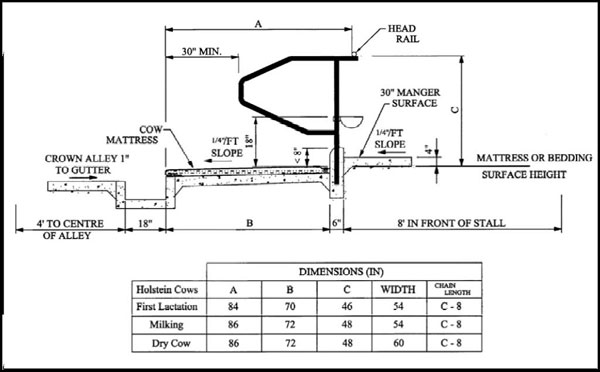 Dairy Cow Comfort Tie-stall Dimensions