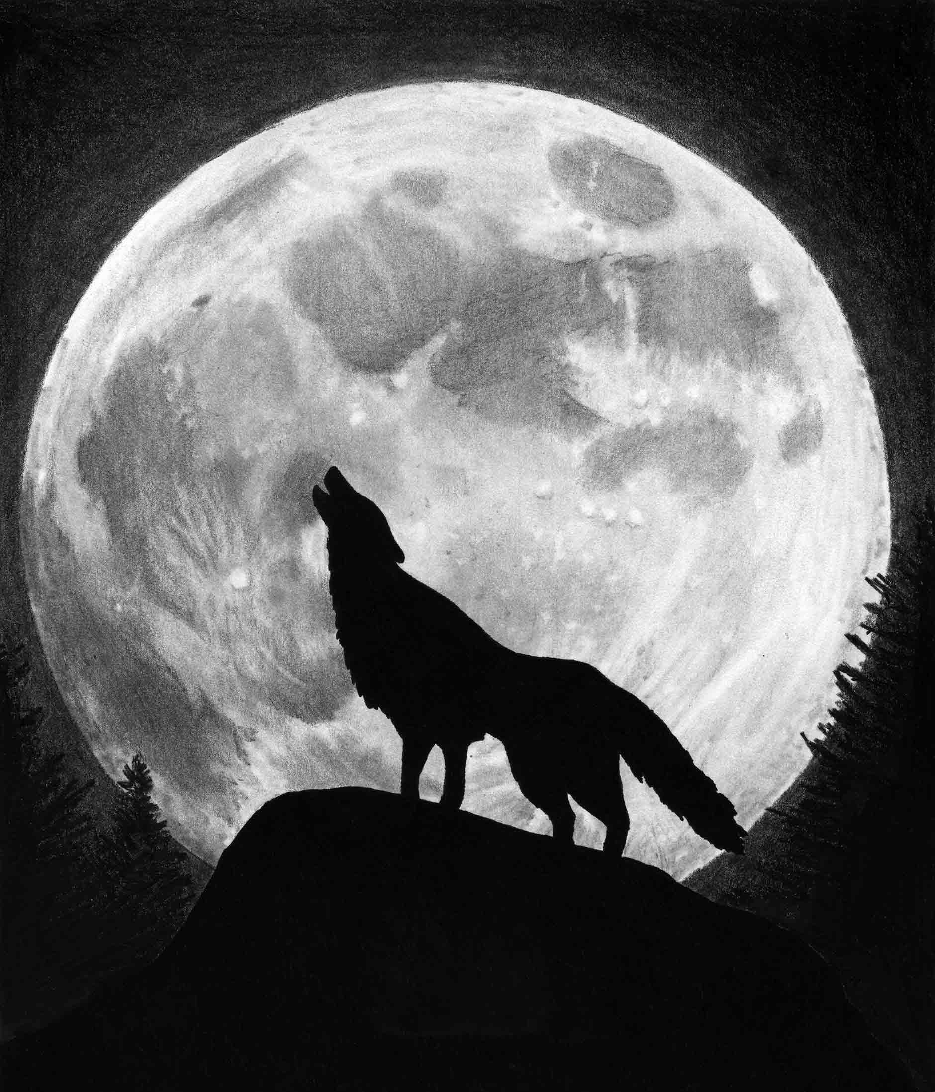 Web Developer Quote Wallpaper 187 Wolf Moon