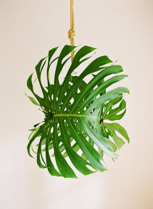 Fall String Lights Wallpaper Weddings Giant Diy Tropical Leaf Pendant Light Once Wed
