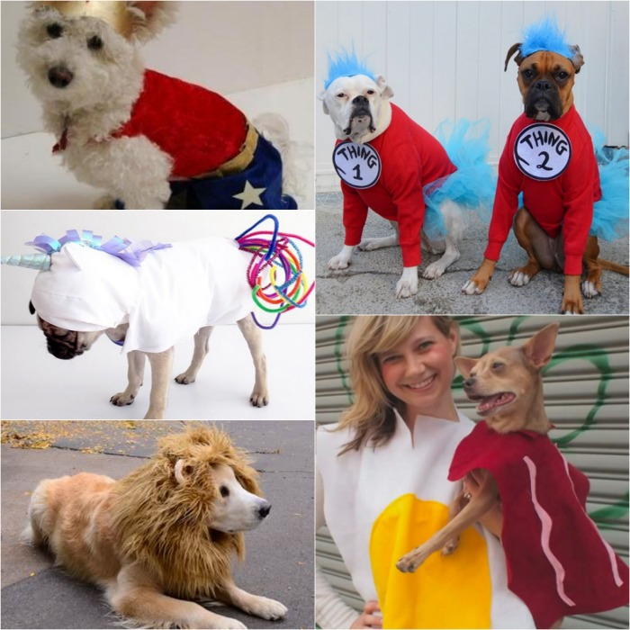 Homemade Dog Costumes