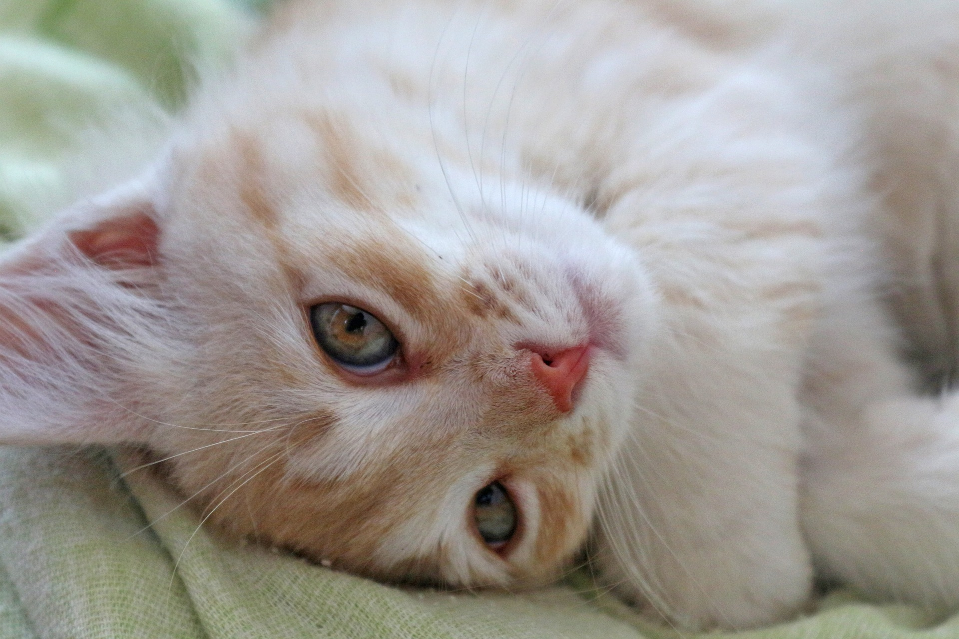 10 Signs Your Cat is the Worst Roommate Ever