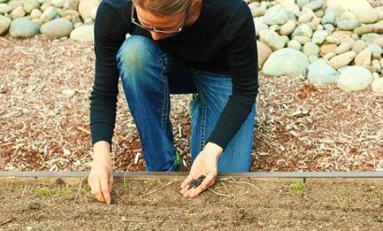 planting green beans