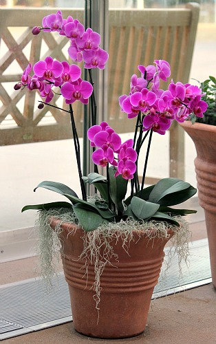 potted purple orchid plants