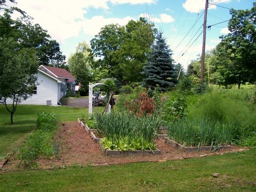 raised garden beds gardening